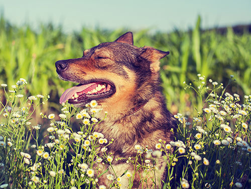 supplements for a healthy dog